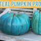 No Tricks This Halloween With The Teal Pumpkin Project - Oct 29 2014 0139PM
