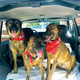 Four-legged Heroes Save Lives with Blood Donations - Oct 31 2014 1252PM