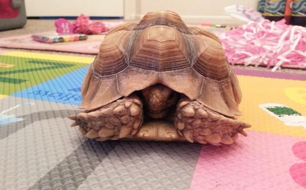Lost: turtle | Altadena Point
