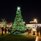 Thumb_townsquarecity_tree_night_web