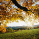 Thumb_autumn_leaves