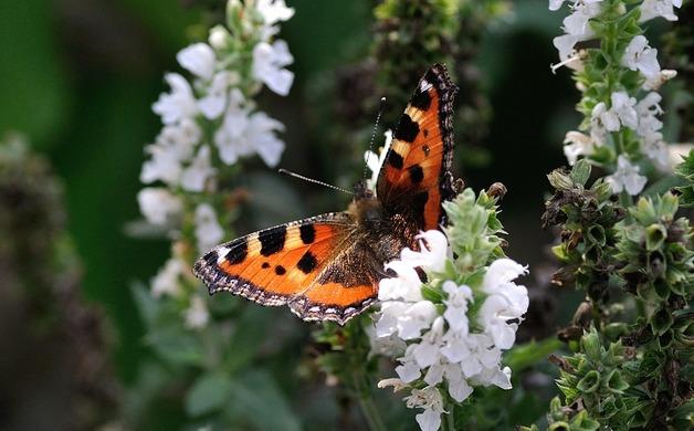Cómo atraer las mariposas a su jardín | Allentuck Landscaping Co.