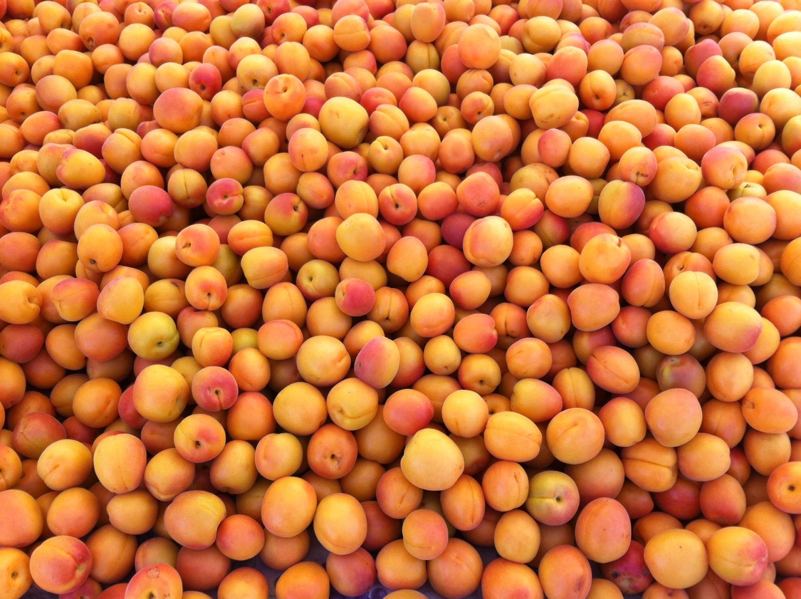 Apricots 20ripe 20