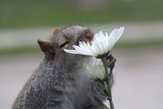 The Fragrance of a Flower