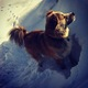 Vote for your favorites in the comments section of the Outdoor K9 Photo Contest page