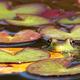 Thumb_frog628