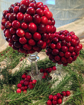 Cranberry Topiaries