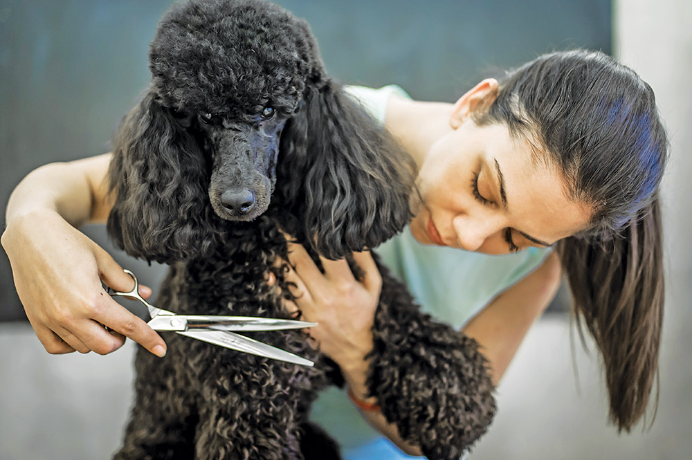 Personal Care for your Pet's Appearance and Health | Enjoy Magazine