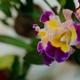 Thumb_011414---orchid-club-meeting-6516