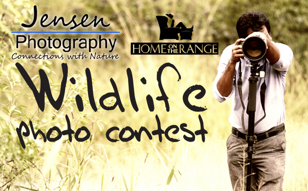 Jensen Photography Wildlife Photo Contest