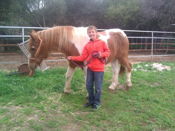 All About Equine Animal Rescue, Inc. & Cedar Springs Arena