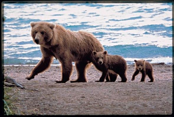 Celebrity Cruise Lines - Alaska