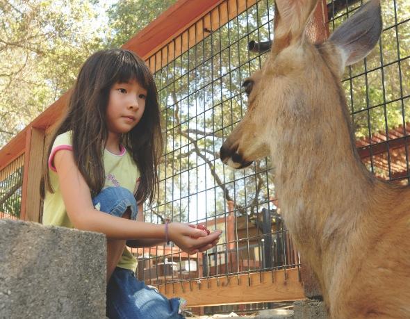 Folsom Zoo Sanctuary