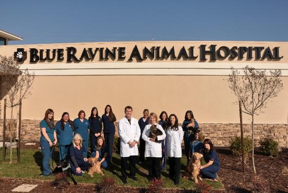 Blue Ravine Animal Hospital
