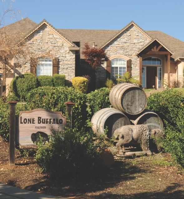 Lone Buffalo Vineyards
