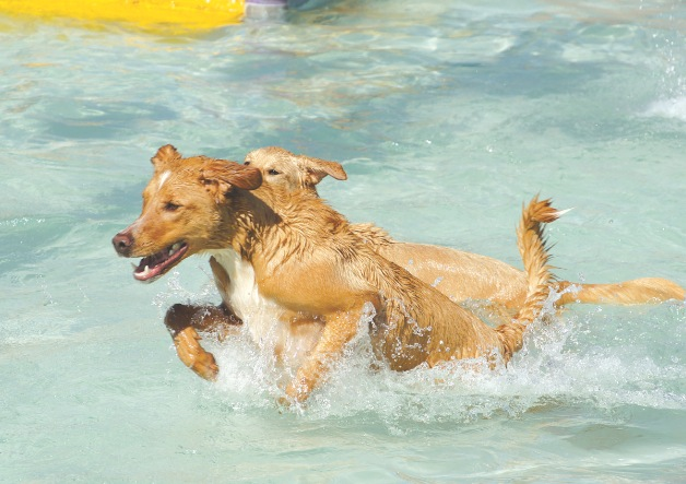 Bark n Splash Bash at Folsom Aquatic Center