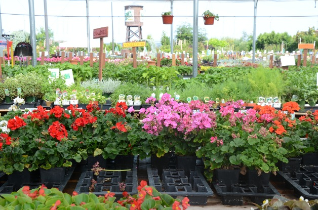 Green Acres Nursery  Supply