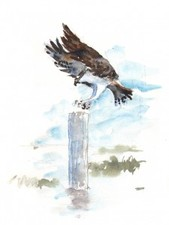 Medium_osprey_final-225x300
