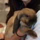 Thumb_dsc_6808_rabbit_srgb