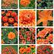 Thumb_orangeplants