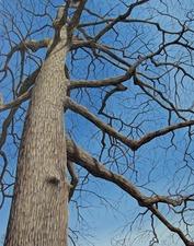 Medium_trees