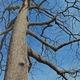 Thumb_trees