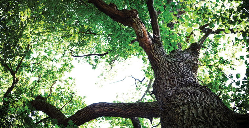 Strong Winds Strong Roots: What Trees Teach Us About Life ...