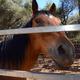 Thumb_dsc_3666_equine_srgb
